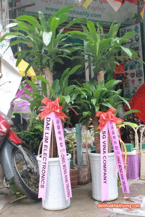 Cây thiết mộc lan tặng tân gia – Phú quý