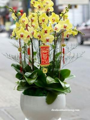 Chậu hoa lan hồ điệp vàng tươi đẹp, chậu được trồng trong chậu sứ trắng sang trọng.