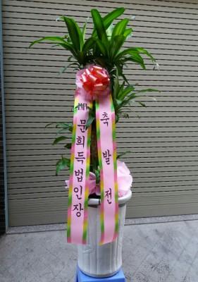 Cây thiết mộc Lan có băng rôn Hàn Quốc .